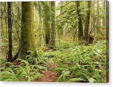 Comox Valley Forrest-5 Canvas Print