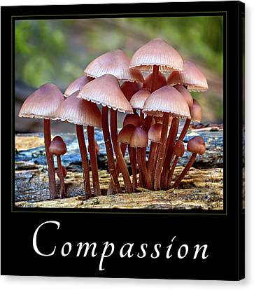 Canvas Print featuring the photograph Compassion by Mary Jo Allen