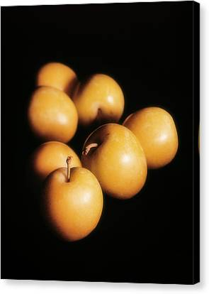 Composition Avec Des Prunes Canvas Print by Kim Lessel