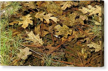 Composition In Brown And Green With Butterfly Canvas Print by Larry Darnell