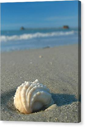 Conch Shell Canvas Print by Juergen Roth