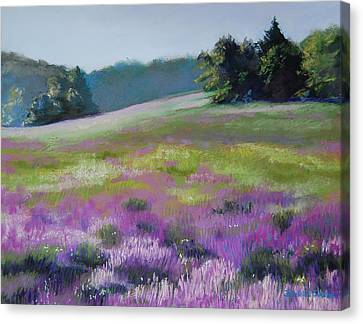 Concord Loosestrife Canvas Print by Jeanne Rosier Smith