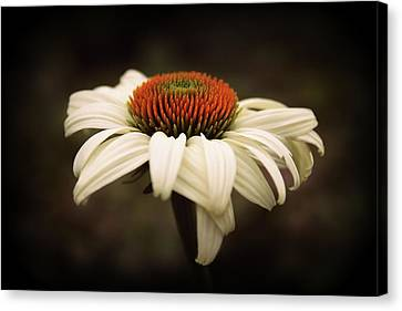 Cone Flower Canvas Print - Cone Flower by Jessica Jenney