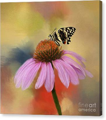 Kathy Rinker Canvas Print - Coneflower And Butterfly by Kathleen Rinker
