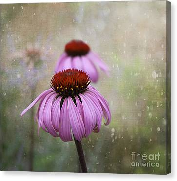 Coneflower Dream Canvas Print by Nina Silver
