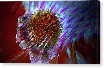 Canvas Print featuring the photograph Coneflower by Irma BACKELANT GALLERIES