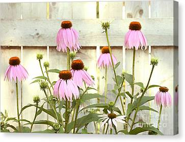 Coneflower Patch Canvas Print
