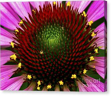 Coneflower  Canvas Print by Paul W Faust - Impressions of Light