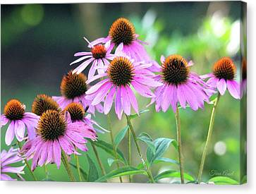 Canvas Print featuring the photograph Coneflowers by Trina Ansel