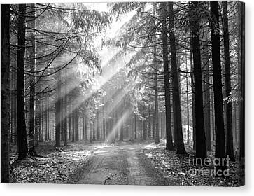 Conifer Forest In Fog Canvas Print by Michal Boubin