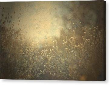 Connected  Canvas Print by Mark Ross