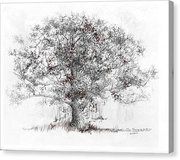 Connecticut - White Oak Canvas Print