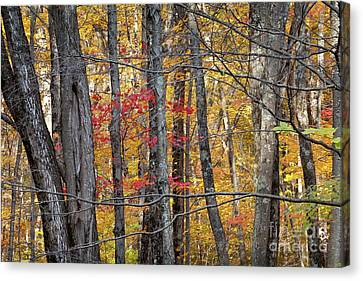 Litchfield County Canvas Print - Connecticut by Susan Cole Kelly