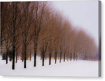 Connolly Trees Canvas Print