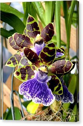 Franklin Park Canvas Print - Conservatory Orchids by Mindy Newman