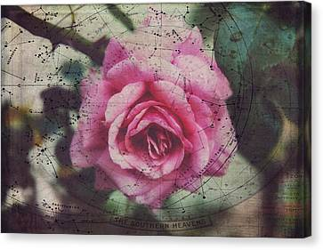 Constellation Rose Canvas Print by Toni Hopper