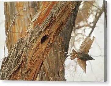 Starlings Canvas Print - Construction Zone by Donna Kennedy