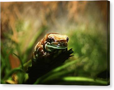 Canvas Print featuring the photograph Content by Anthony Jones