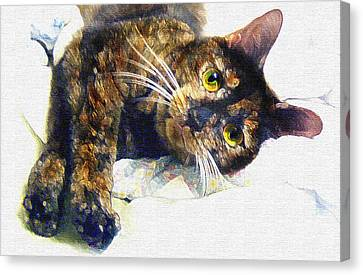Animal Quilts Canvas Print - Contented Cat by Jane Schnetlage