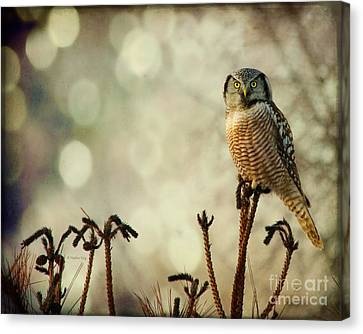 Convenient Perch Canvas Print