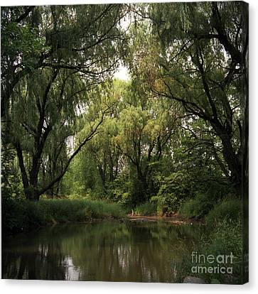 Cook County Forest Preserve No 6 Canvas Print by Kathy McClure