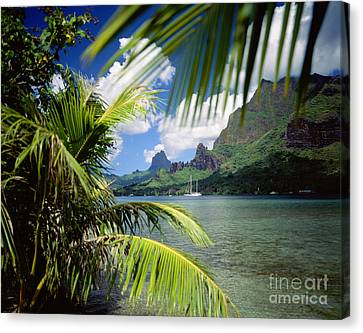 Cooks Bay With Sailboat Canvas Print by Ron Dahlquist - Printscapes