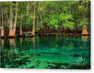 Cool Blue Manatee Spring Waters Canvas Print by Adam Jewell
