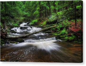 Forest Canvas Print - Cool Spring Stream by Bill Wakeley