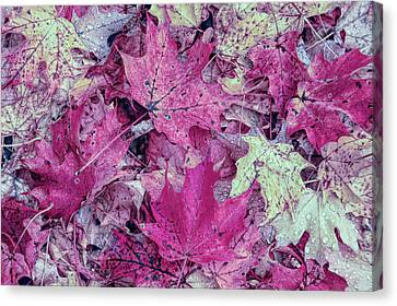 Colorful Canvas Print - Cool Sunset Autumn Leaves by Aimee L Maher Photography and Art Visit ALMGallerydotcom
