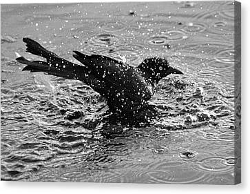 Cooling Off Canvas Print by Cynthia Guinn