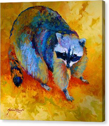 Coon Canvas Print by Marion Rose