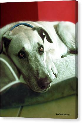 Buy Dog Art Canvas Print - Cooper Goes Cute Artwork by Miss Pet Sitter