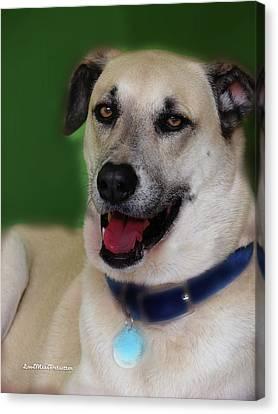 Buy Dog Art Canvas Print - Cooper Portrait by Miss Pet Sitter