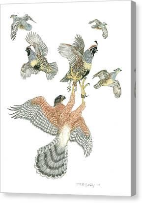 Cooper's Hawk And Gambels Quail Canvas Print by Tim McCarthy