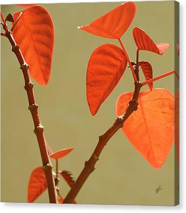 Copper Plant Canvas Print by Ben and Raisa Gertsberg