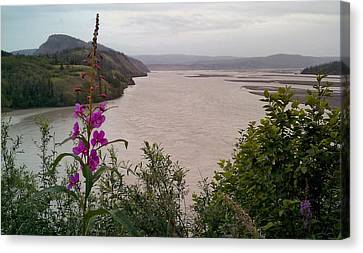 Canvas Print featuring the photograph Copper River Fireweed by Adam Owen
