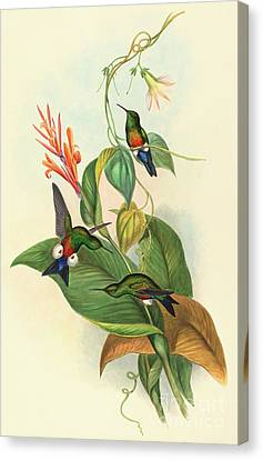 Coppery Vented Puff Leg Canvas Print by John Gould