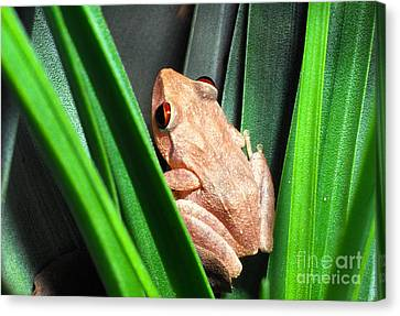 Bromeliad Canvas Print - Coqui In Bromeliad by Thomas R Fletcher