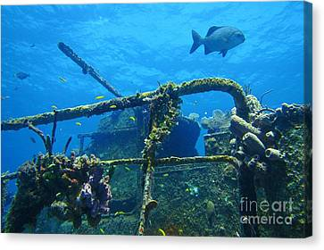 Coral And Fish On A Caribbean Shipwreck Canvas Print