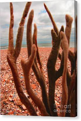 Canvas Print featuring the photograph Coral Confusion by Laura Brightwood
