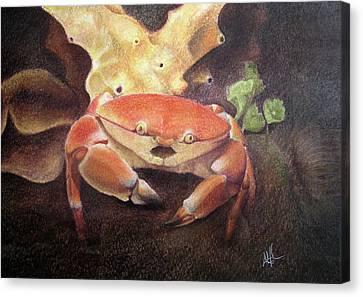 Coral Crab Canvas Print