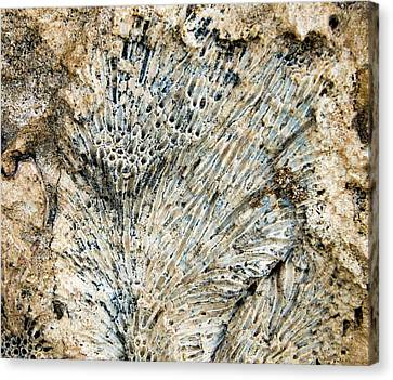 Canvas Print featuring the photograph Coral Fossil by Jean Noren