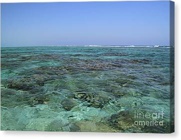 Canvas Print featuring the photograph Coral Reef And Breakers by Edward R Wisell