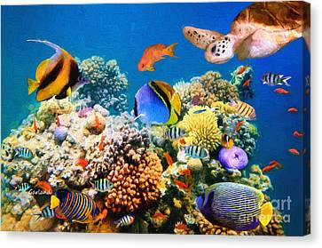 Clown Fish Canvas Print - Coral Reef Tropical Reef Fish And Turtle by Garland Johnson