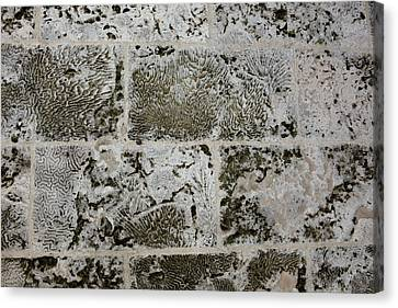 Coral Wall 205 Canvas Print by Michael Fryd