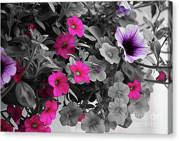 Coreopsis And Petunias Canvas Print