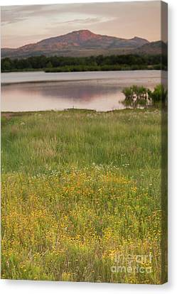 Corepsis Blooming At The Quanah Parker Lake Canvas Print by Iris Greenwell