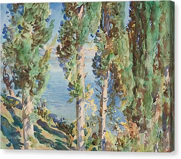 Corfu Cypresses Canvas Print