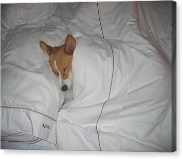 Corgi Sleeping Softly Canvas Print by Don Struke