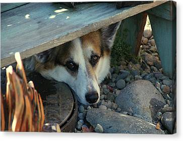 Corgi Under The Bench Canvas Print by Mick Anderson